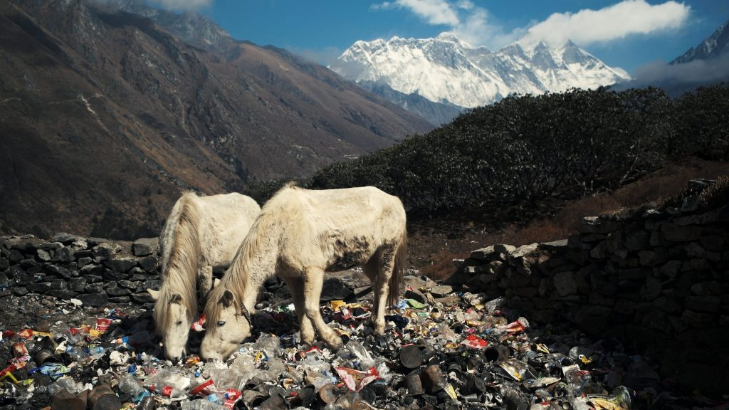 Horses grazing through trash with Mt Everest visible in the background. This image won 2nd prize in Pictures of the Year International in 2019.